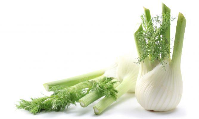 Las 10 ventajas de Hinojo para la Salud